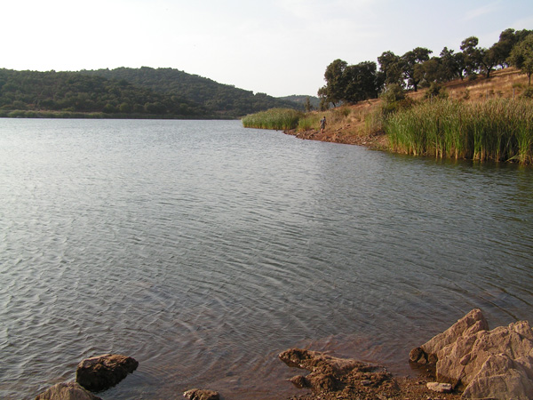 Embalse de Cazalla – pesca a carpfishing