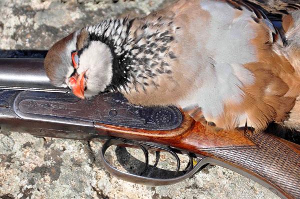 La caza generó 3.583 millones en Andalucía en 2010 – Intercaza 2011